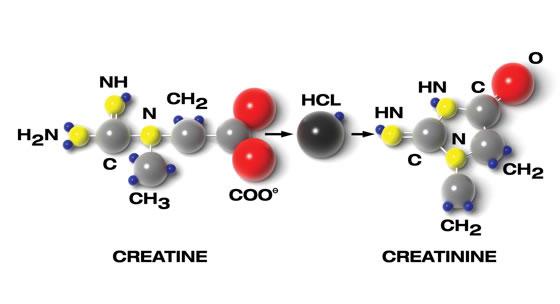 Creatine creatinine levels